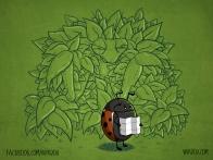 Just a Ladybug