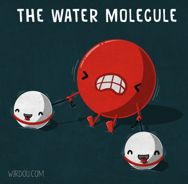 The water molecule