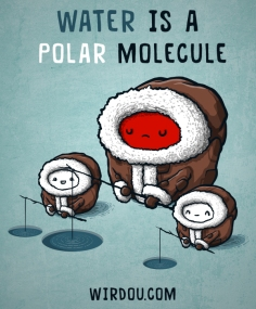 water polar molecule