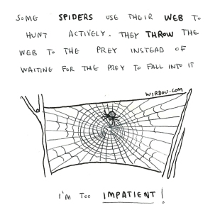 science, curious, curiosity, fun, funny, humor, spiders, spiderweb, hunt, adaptation, predator