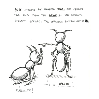 science, curious, curiosity, fun, funny, humor, ants, fungi, parasite, colony