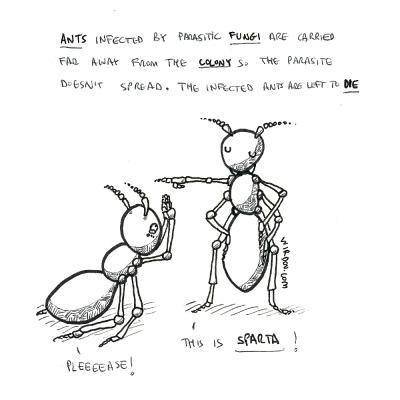 science, curious, curiosity, fun, funny, humor, ants, fungi, parasite, colony