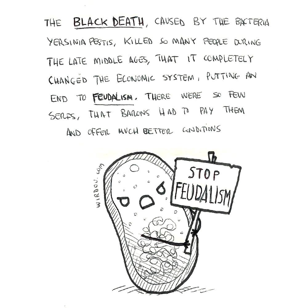 science, curious, curiosity, fun, funny, humor, black death, plague, bacteria, feudalism, history, medieval