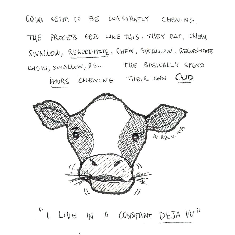 science, curious, curiosity, fun, funny, humor, cows, cud, regurgitate, eating