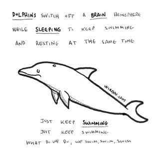 dolphin-sleep