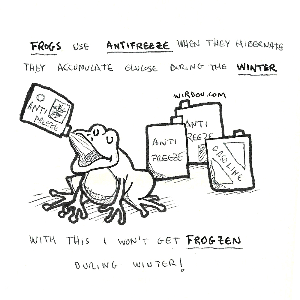 science, curious, curiosity, fun, funny, humor, frog, antifreeze, winter