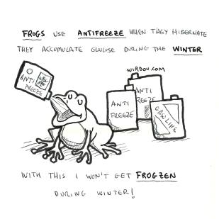 science, curious, curiosity, fun, funny, humor, frog, antifreeze, winter