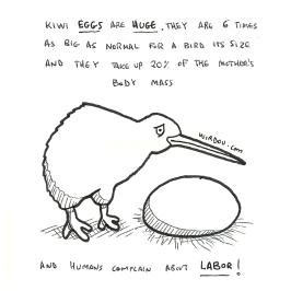 science, curious, curiosity, fun, funny, humor, kiwi, bird, egg