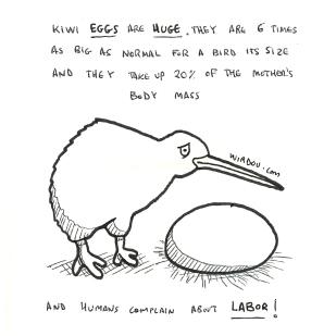 kiwi-eggs