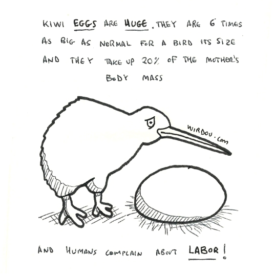 science, curious, curiosity, fun, funny, humor, kiwi, bird, egg
