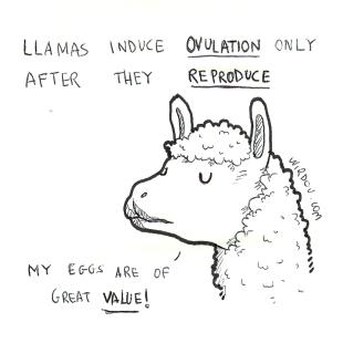 science, curious, curiosity, fun, funny, humor, llama, ovulation, reproduction
