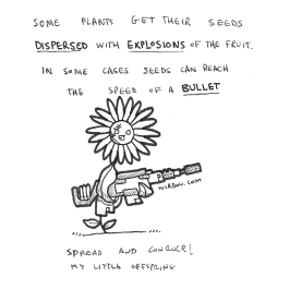 science, curious, curiosity, fun, funny, humor, flower, seeds, explosions, bullet