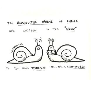 snails-genitals
