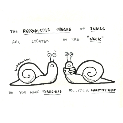 science, curious, curiosity, fun, funny, humor, snails, reproduction, penis