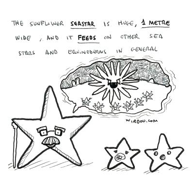 science, curious, curiosity, fun, funny, humor, seastar, starfish, sunflower, echinoderms