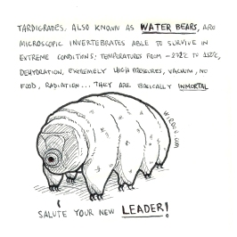 science, curious, curiosity, fun, funny, humor, water bear