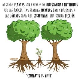 arboles-compartir-español-para-web