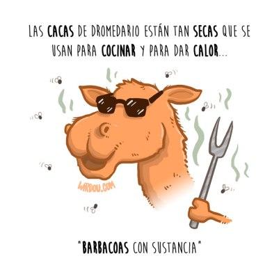 caca-camello-español-para-web