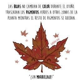 hojas-español-para-web