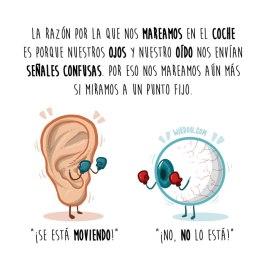 ojo-oreja-coche-español-para-web