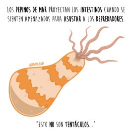 pepinos-de-mar-español-para-web