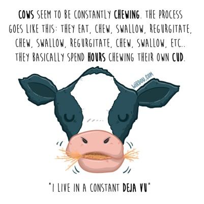 vacas-vómito-inglés-para-web