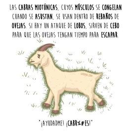 cabras-miotónicas-español-para-web