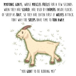 cabras-miotónicas-inglés-para-web