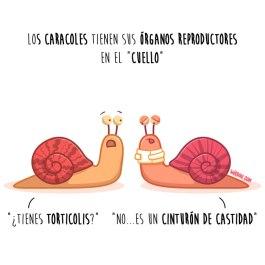 caracoles-cuello-español-para-web