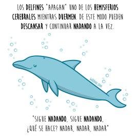 delfines-dormir-español-para-web