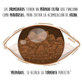 dromedarios-parpado-español-para-web