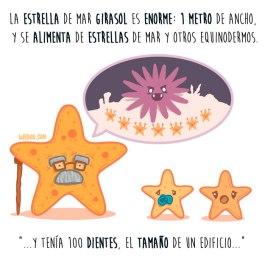 estrella-girasol-español-para-web