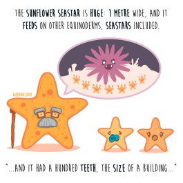 estrella-girasol-inglés-para-web