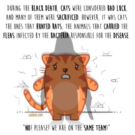 gatos-peste-inglés-para-web