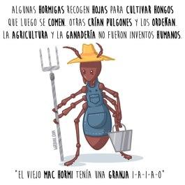 hormigas-granjeras-español-para-web