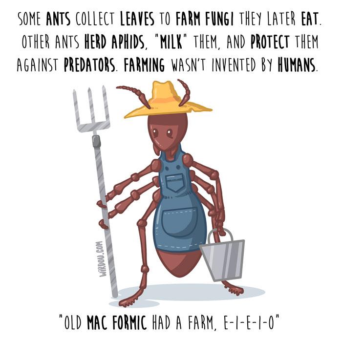 hormigas-granjeras-inglés-para-web