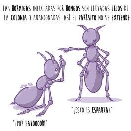 hormigas-hongos-español-para-web