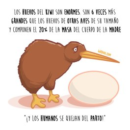 kiwi-huevo-español-para-web