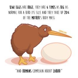kiwi-huevo-inglés-para-web