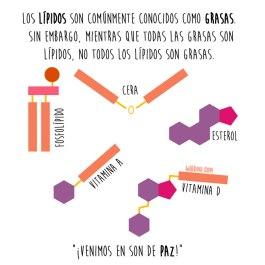 lipidos-grasas-español-para-web