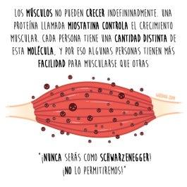 miostatina-músculo-español-para-web