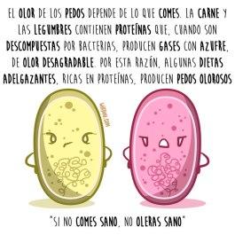 pedos-dietas-español-para-web