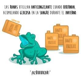 ranas-anticongelante-español-para-web