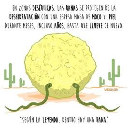 ranas-desierto-español-para-web