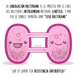 sexo-bacteriano-español-para-web