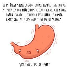 sonido-estomago-español-para-web